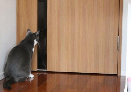 何で扉が・・・