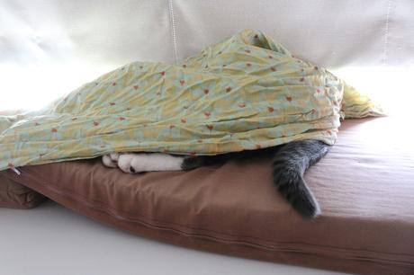 潜ってる寝~♪