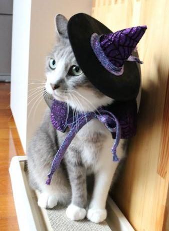 美猫魔女で~す♪