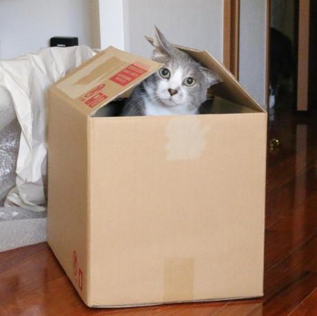 !この箱つまんない