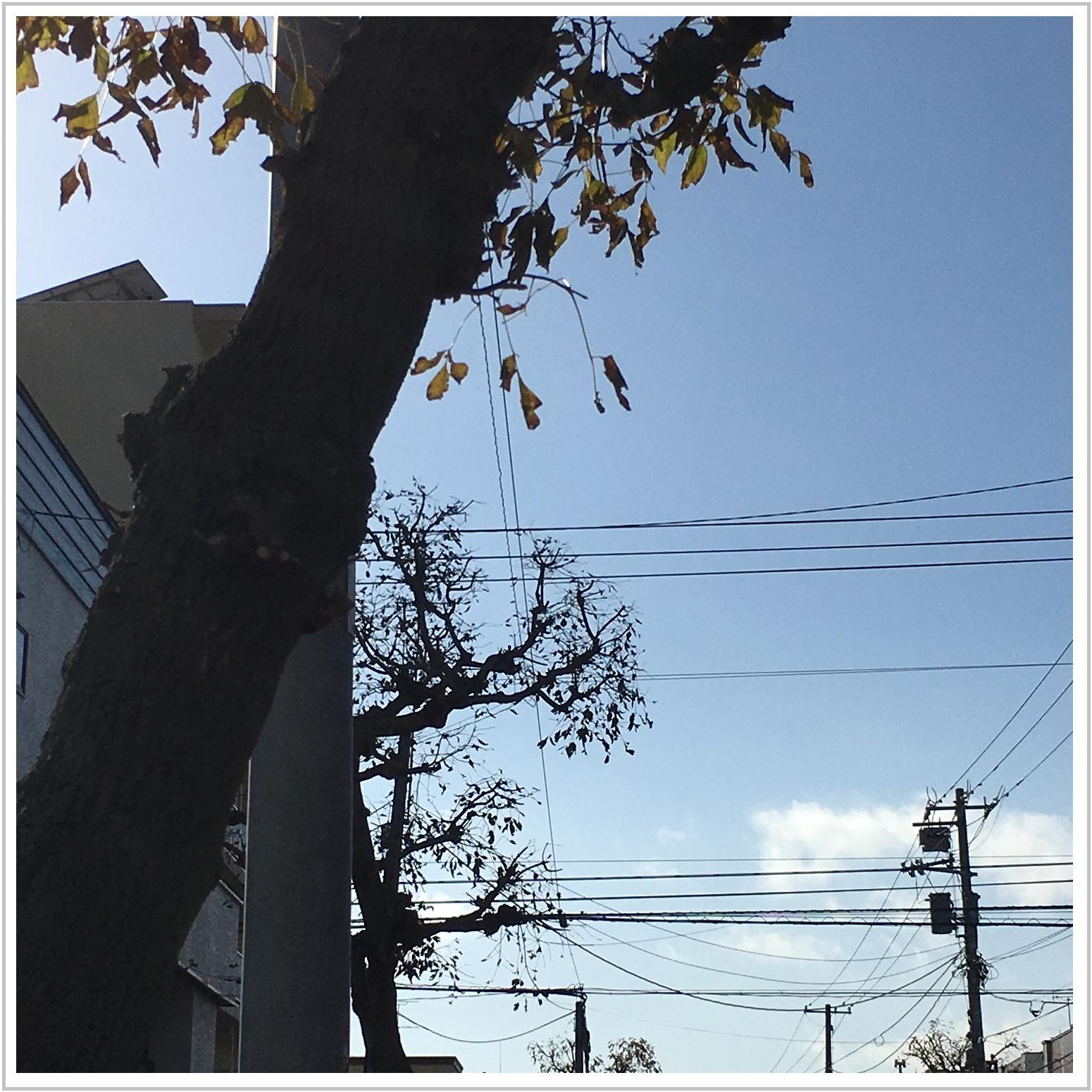 fall_1_1019.jpg