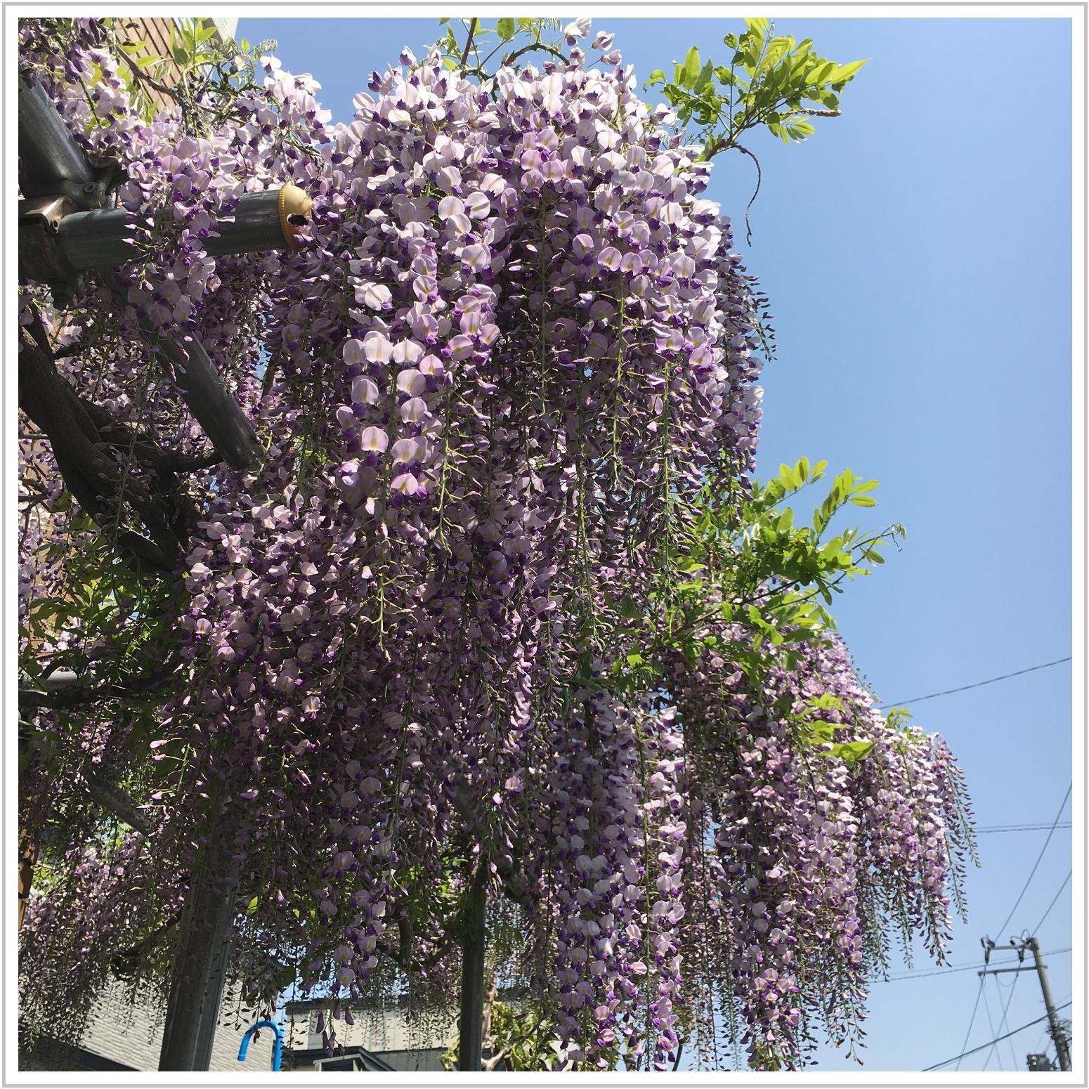 fuji_2_527.jpg