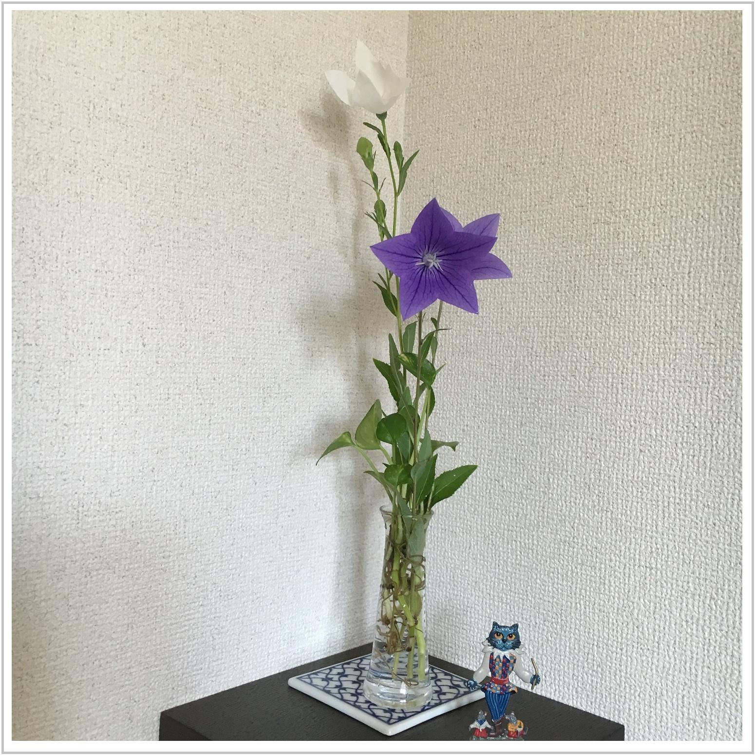 kikyo_6_721.jpg