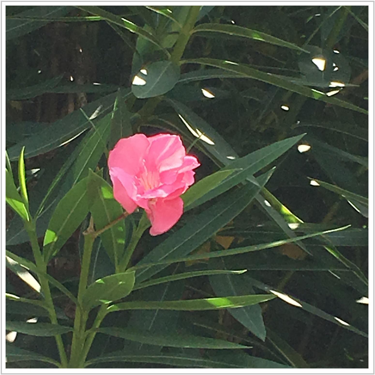 nagoya_15_805.jpg