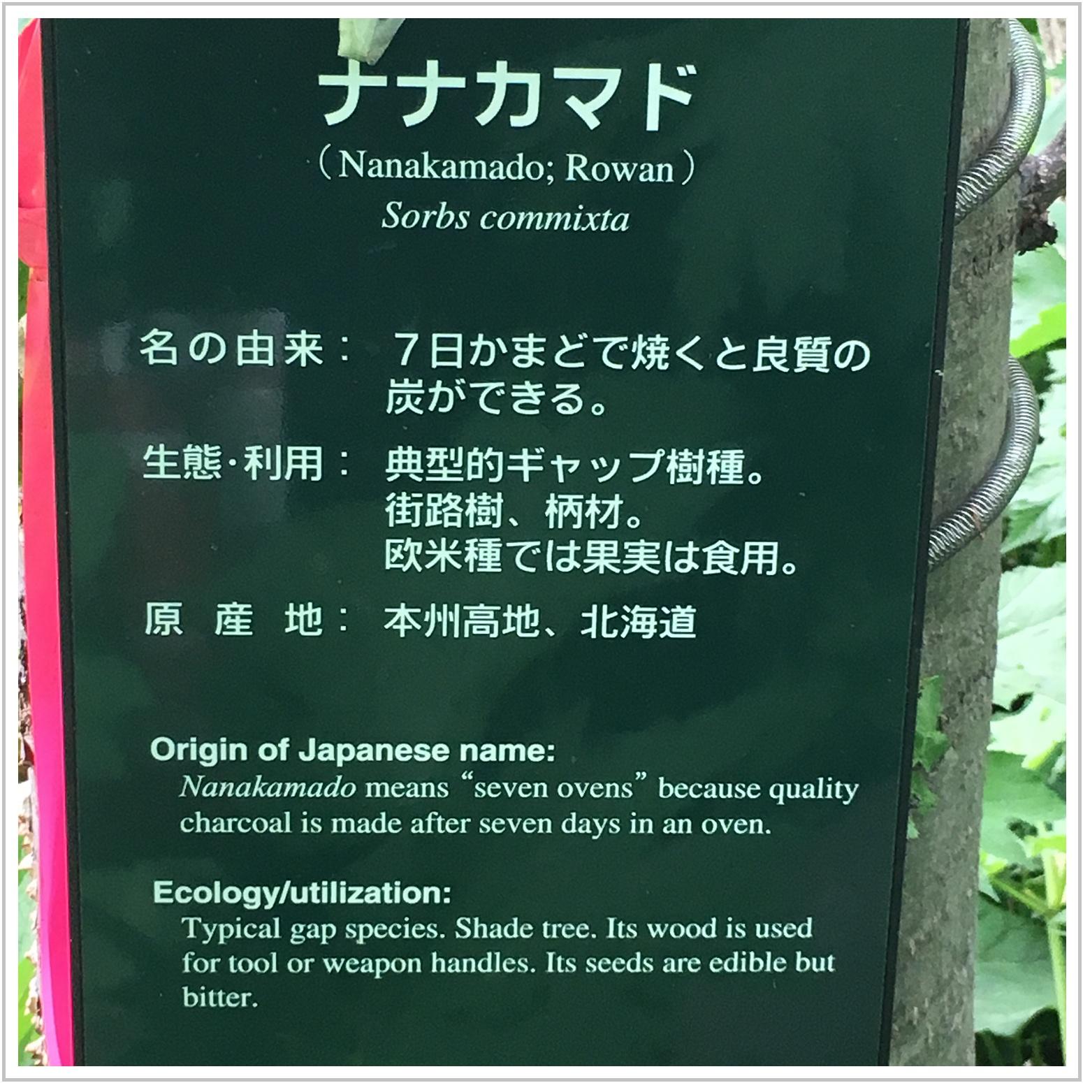nanakamado_4_527.jpg