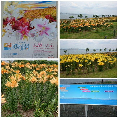 2016-6-6 舞州ゆり園