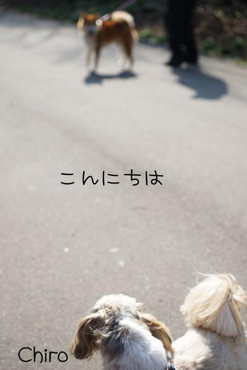 04-22_7808.jpg