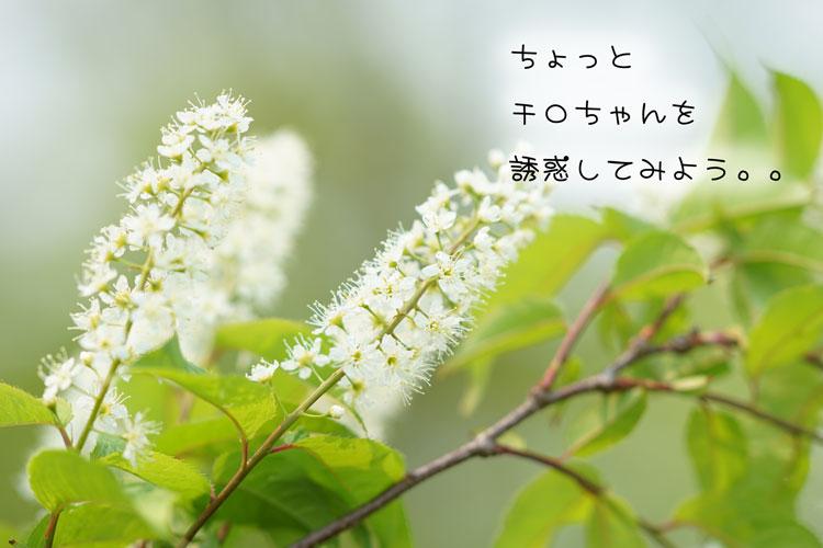 05-20_8402.jpg