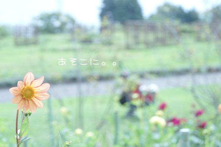 09-14_0459.jpg