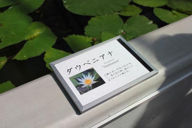 20160504_kakegawa2_08.jpg