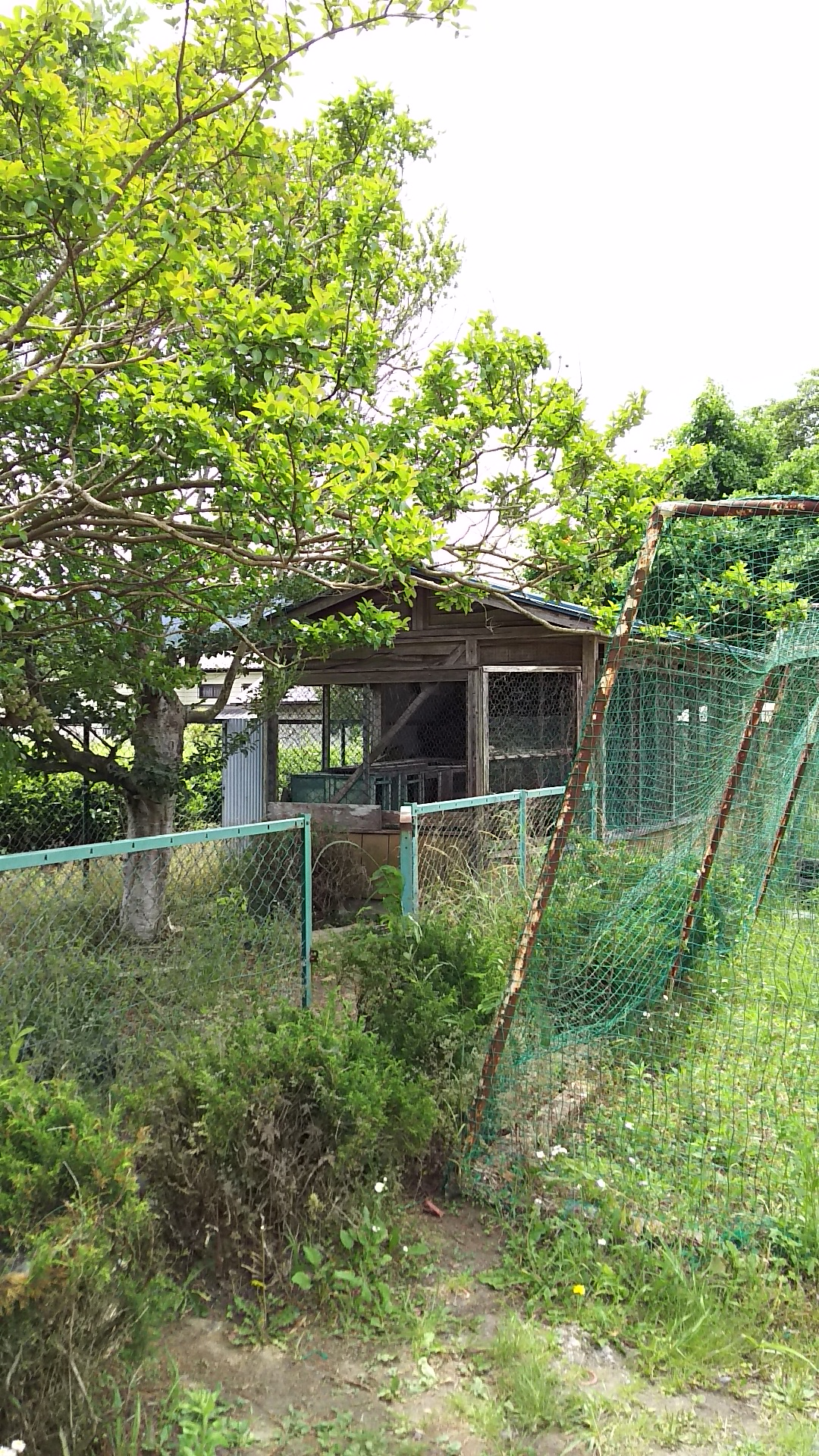 DSC_0723daigouwaokaooarai (51)