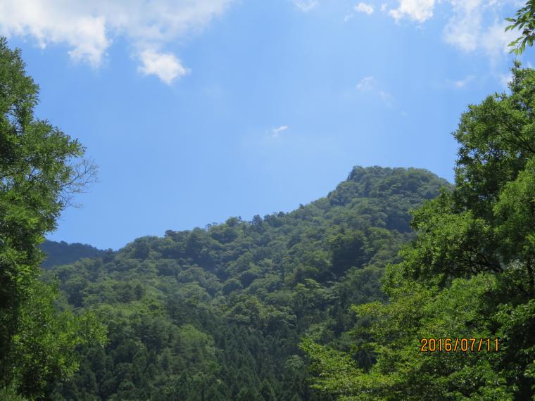 妙義山クマタカ