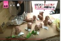 ウッディー粘土工作 動物