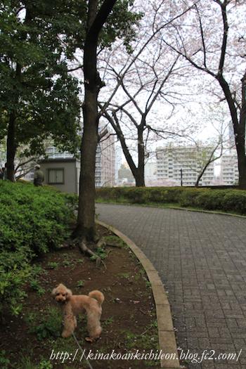 160407 Sumidagawa 1