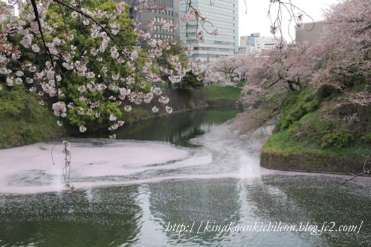 160425 Chidorigafuchi 7