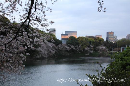 160425 Chidorigafuchi 11
