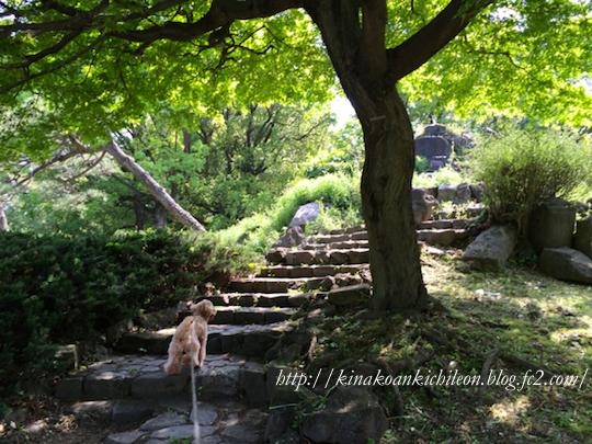 160426 Hibiya park 3