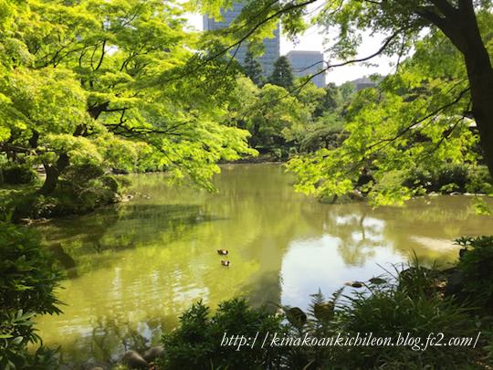 160426 Hibiya park 10