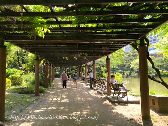 160426 Hibiya park 11