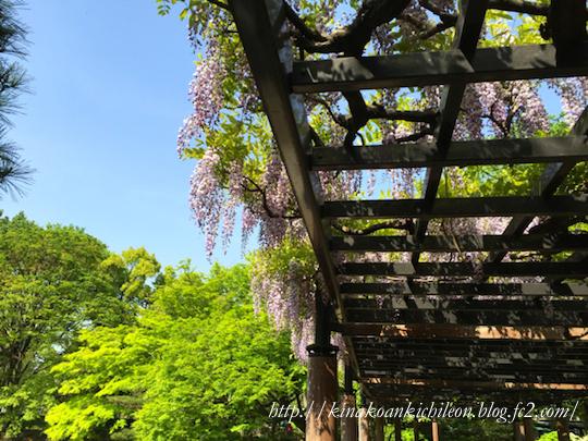 160426 Hibiya park 12