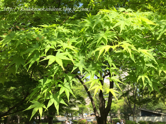 160426 Hibiya park 13