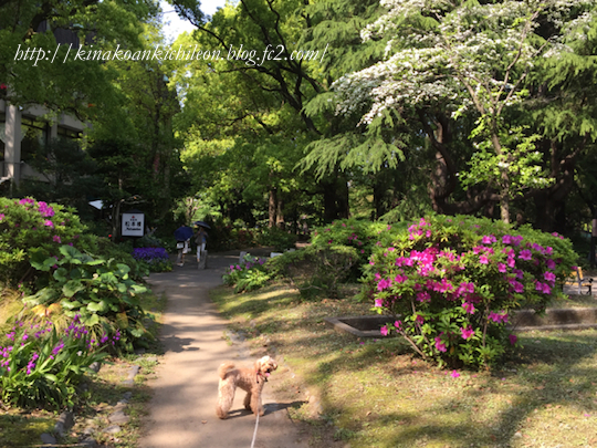 160426 Hibiya park 17