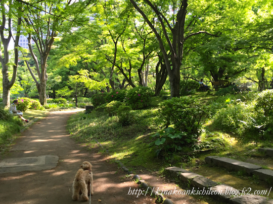 160426 Hibiya park 18
