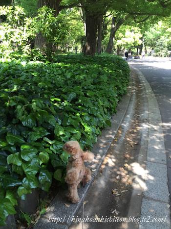 160426 Hibiya park 19