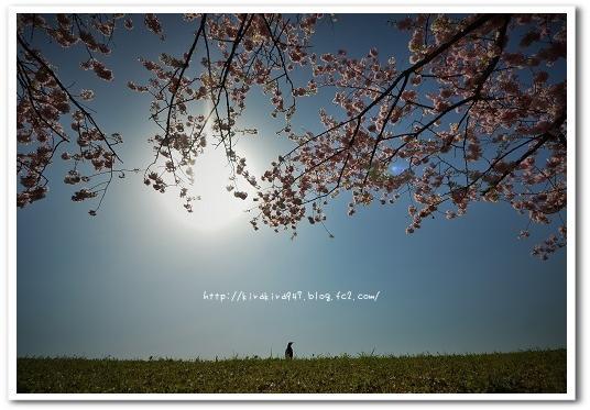 思川桜とつぐみちゃん。