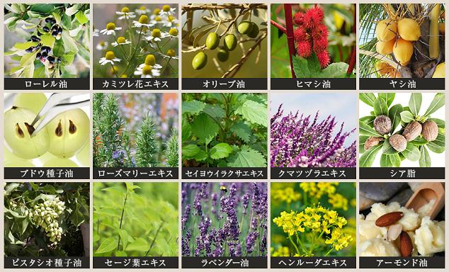 ガミラシークレット 15種類の植物