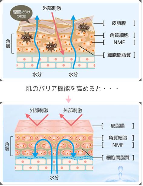 ロゼット オウンセラ 肌バリア低下の図