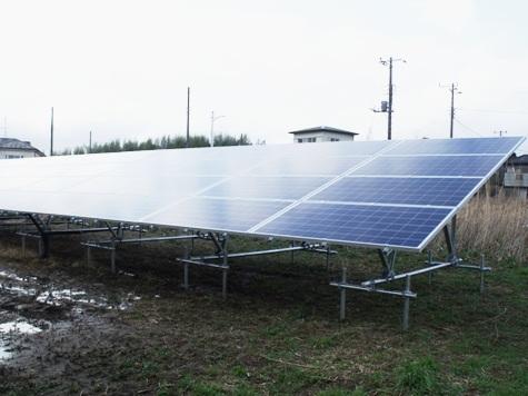 201603019 クンシランと太陽光発電 026-2