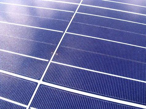 201603019 クンシランと太陽光発電 030-2