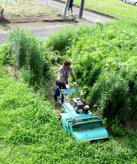 20160725 プロの草刈り 004-3