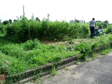 20160725 プロの草刈り 011-2