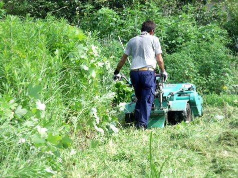 20160725 プロの草刈り 015-2