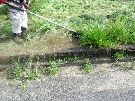 20160725 プロの草刈り 024-2