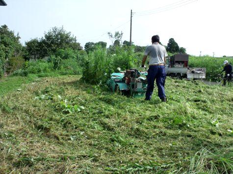 20160725 プロの草刈り 025-2