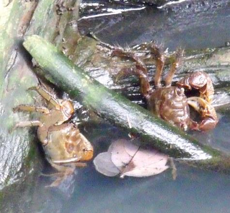 20150818 キンカンと蟹 050-5