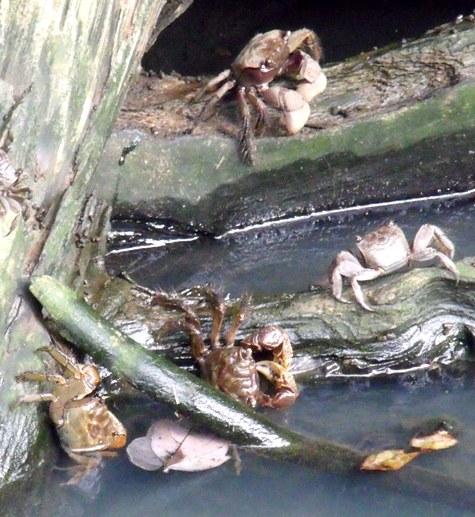 20150818 キンカンと蟹 050-4