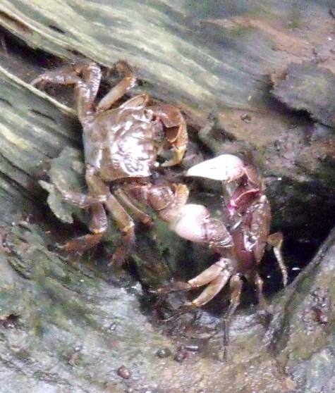 20150818 キンカンと蟹 061-2