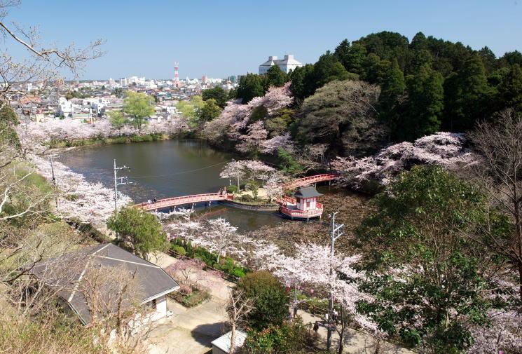 chiba-mobara-kouennosakura-11-1-m.jpg