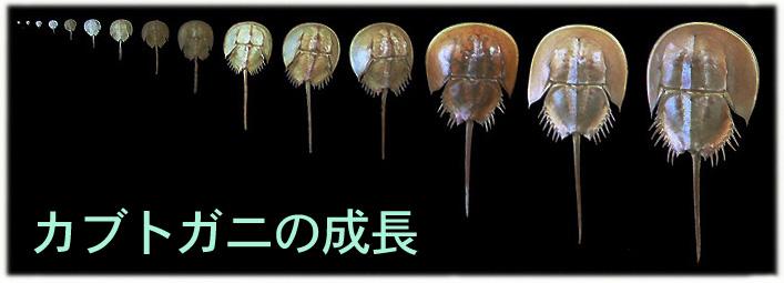 seichou-1_20160525133729ccd.jpg