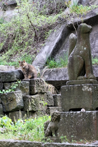 稲荷社の狛ワンコと狛狐と狛ニャンコ