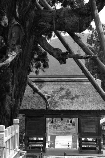随身門と八百杉