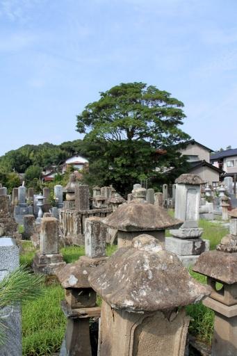 大雄寺の墓地