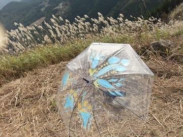 10月の傘9