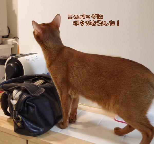 このバッグはボクが占拠した!