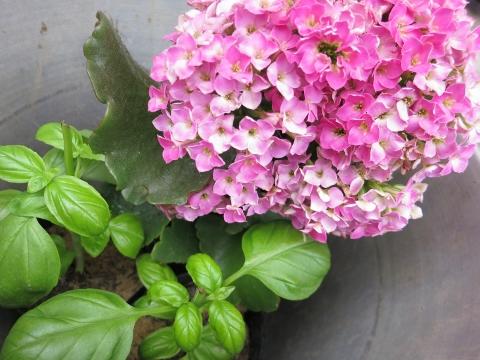 春の花セール中