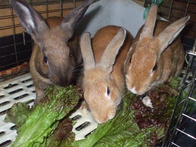 箱ウサギ2